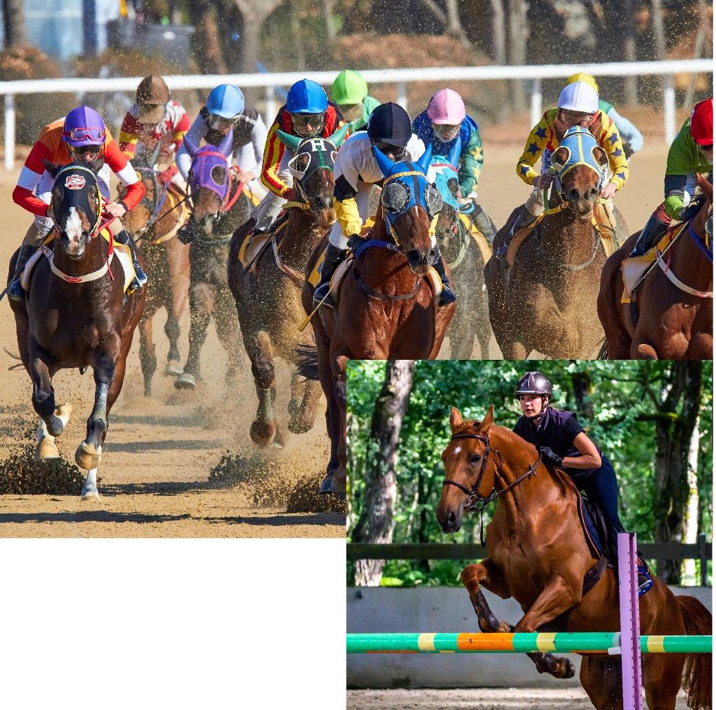 AnimalLaw_Graphics_Equine-Racing-13