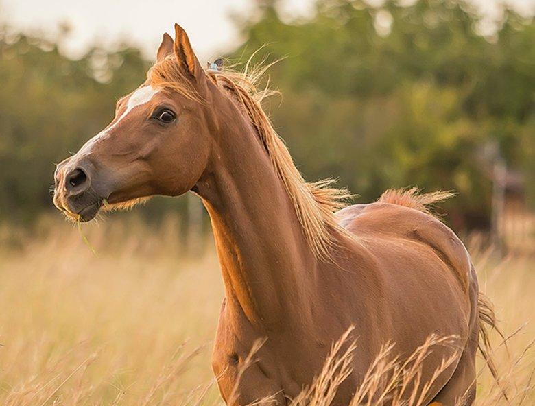 sarah-olive-TGl7QuHRIDM-unsplash_horse_780x592