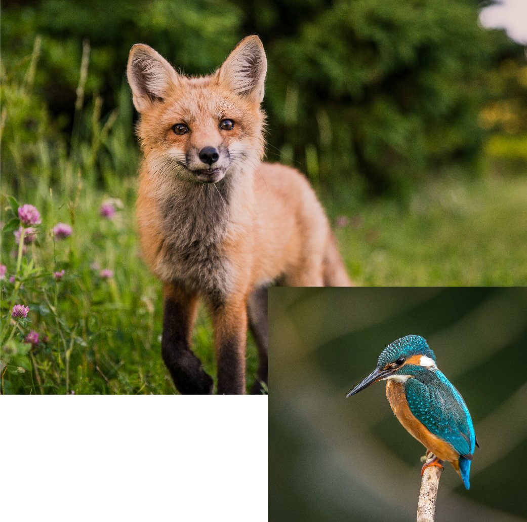 AnimalLaw_Graphics_CLE-Fox-Bird-28