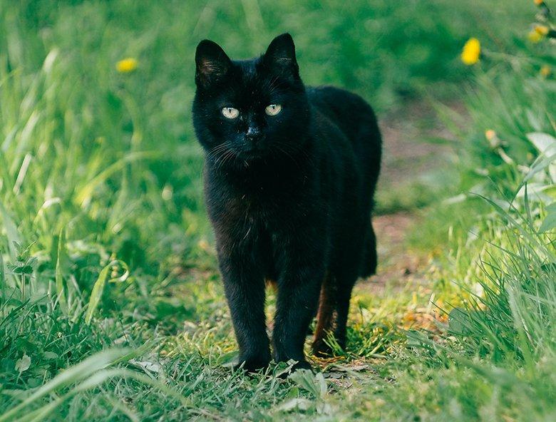 daria-shatova-d80ztY9HUTw-unsplash_black-cat_780x592